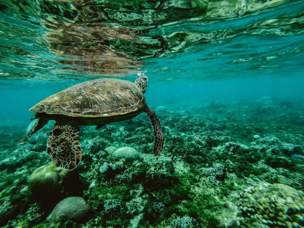 zeeschildpad in de oceaan