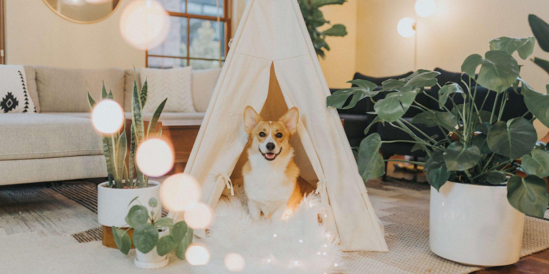hond in tipi in huis met planten en veel wit