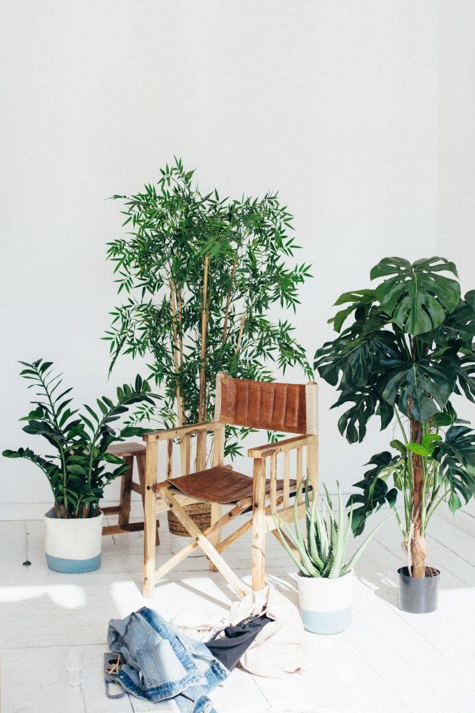 planten in huis met regisseursstoel