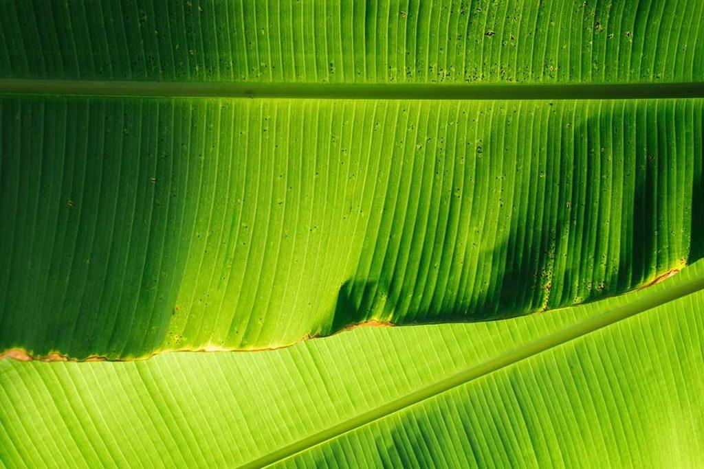 bananen-blad-plastic-thedailygreen-3