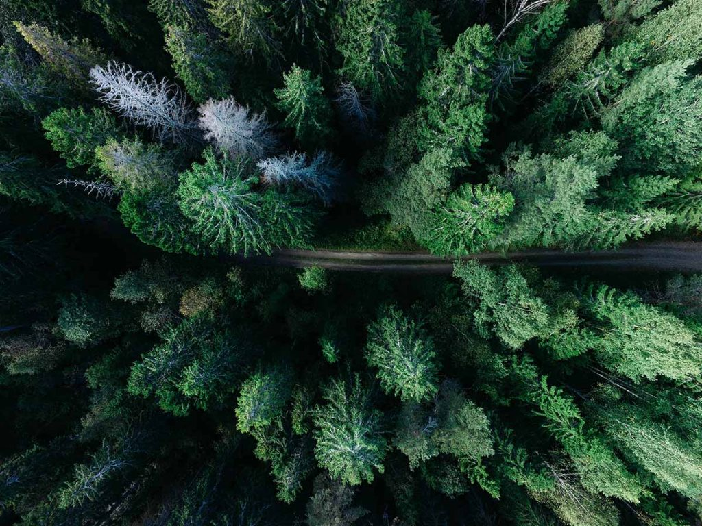 bomen-planten-bos-thedailygreen