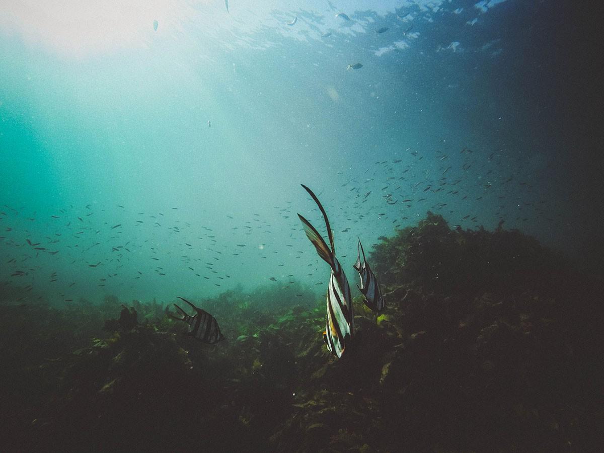 klimaatverandering-onder-water-thedailygreen