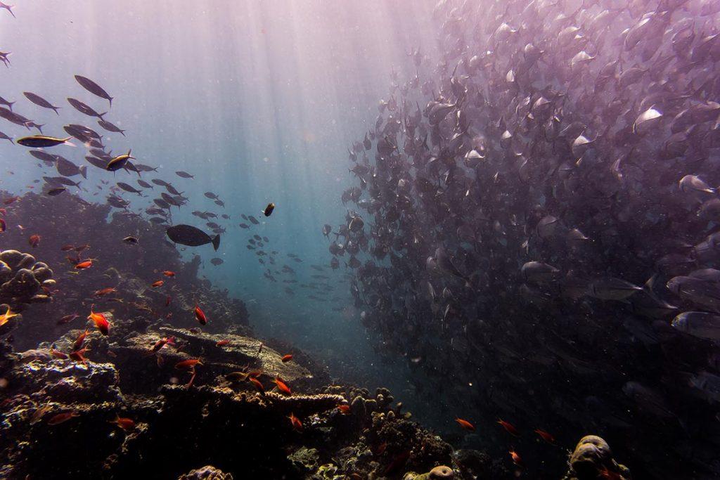 klimaatverandering-zee-thedailygreen