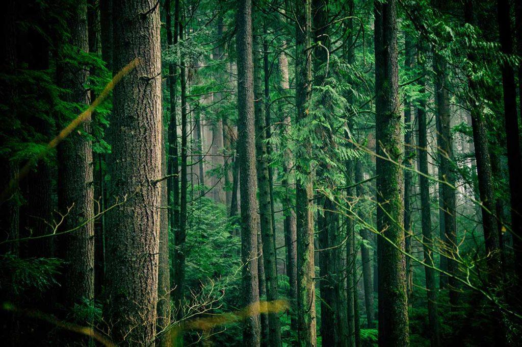 regenwoud-thedailygreen