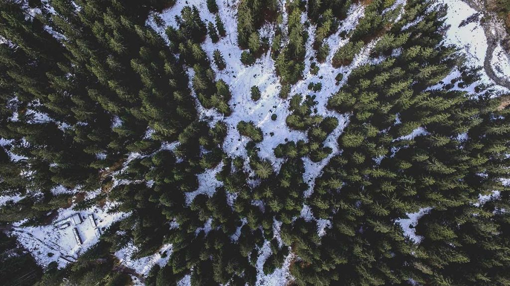 bomen-planten-canada-thedailygreen