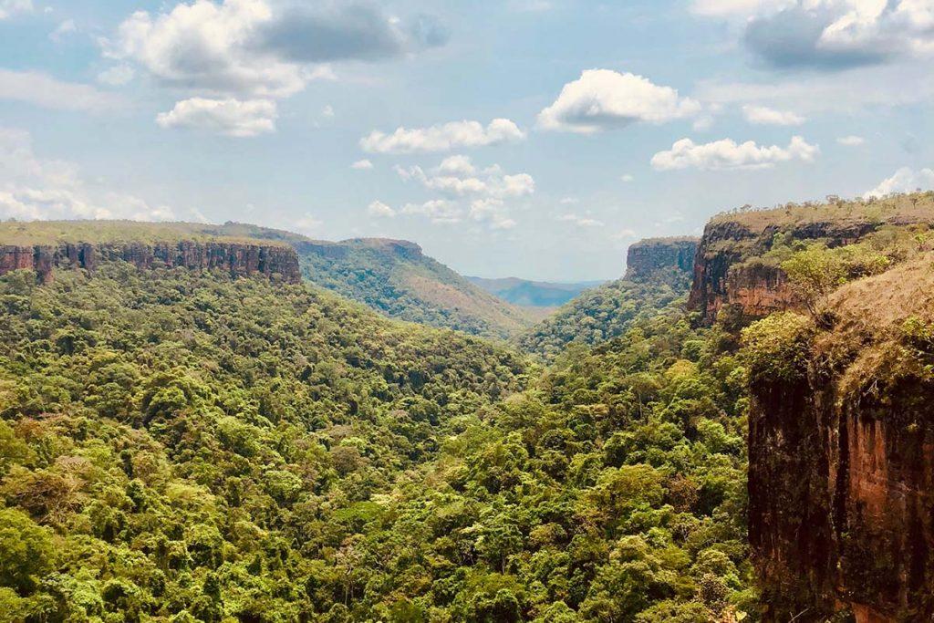 amazone-oerwoud-thedailygreen