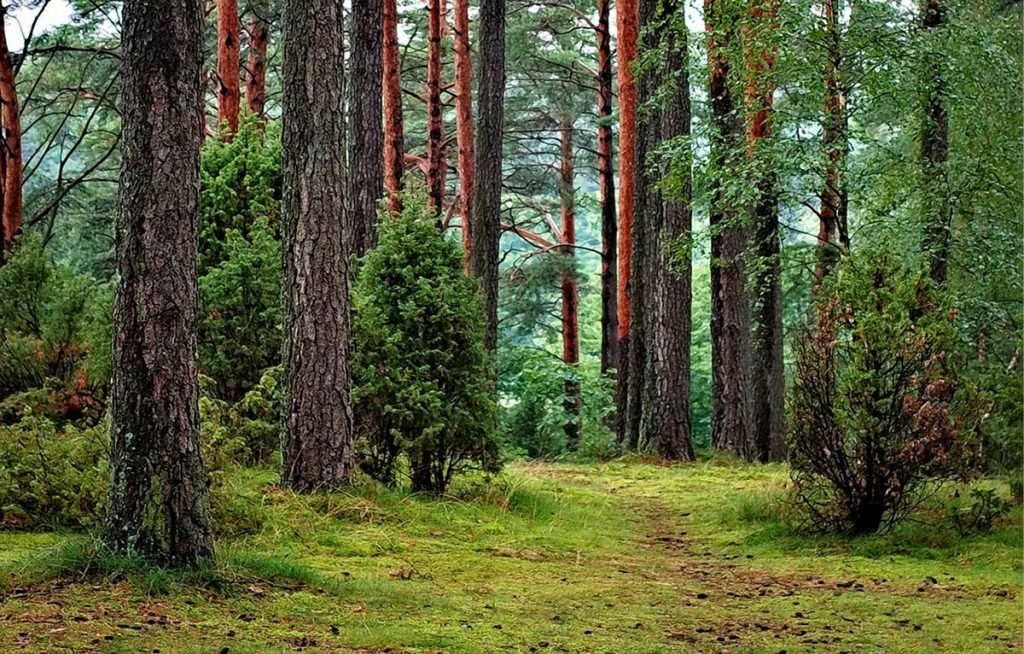 co2-compenseren-bomen-planten-thedailygreen