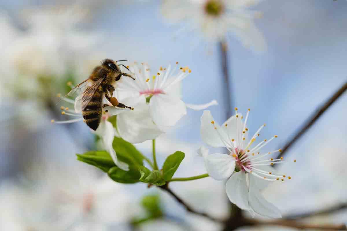 duurzaam-bijen-thedailygreen