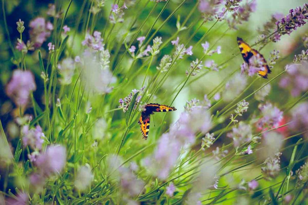 duurzame-tuin-vlinders-thedailygreen