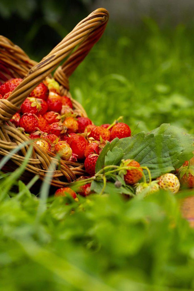 ecologisch-duurzaam-eten-thedailygreen
