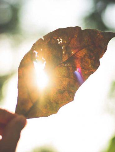 hittegolven-klimaatverandering-thedailygreen