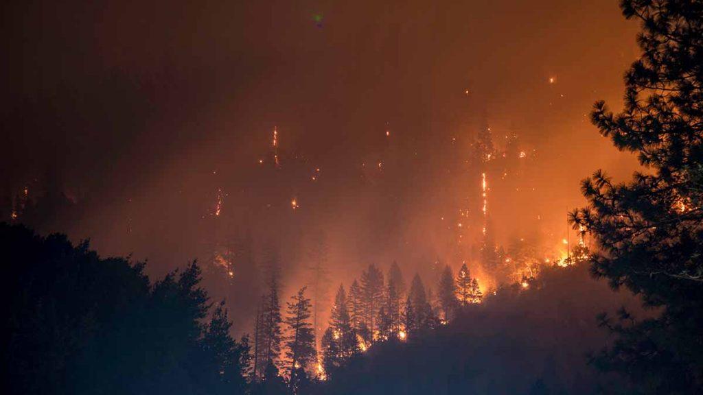 klimaatverandering-bosbranden-thedailygreen