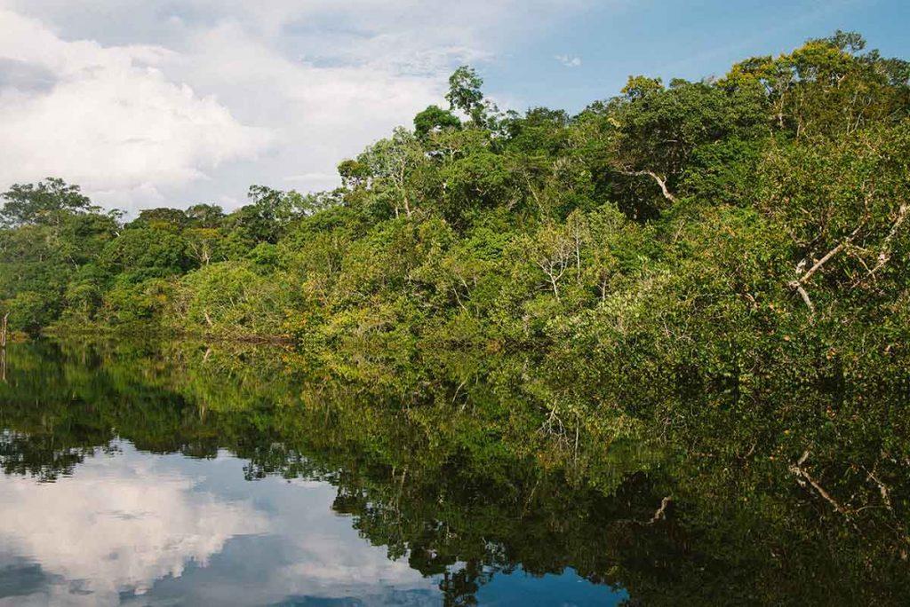 regenwoud-brazilie-thedailygreen