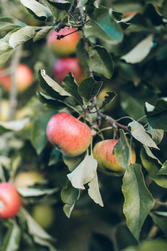 lokaal-eten-appels-thedailygreen