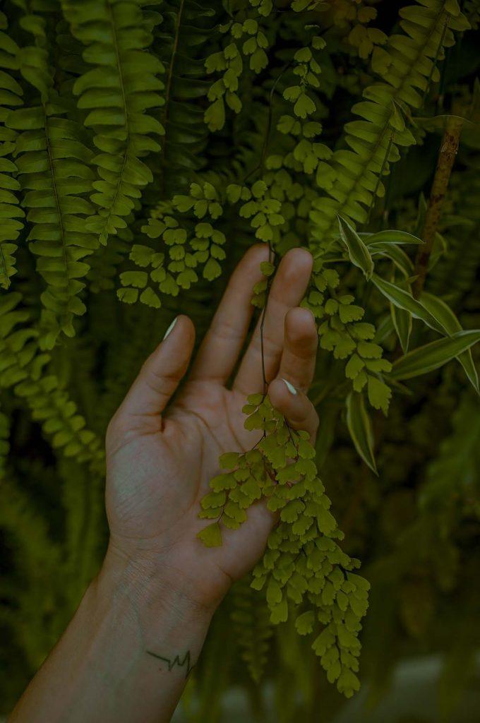 bedreigde-planten-thedailygreen