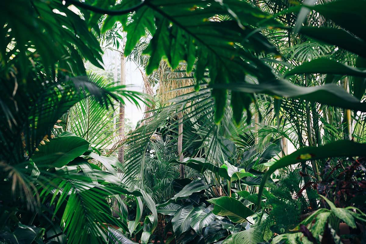 tropische-planten-bedreigt-thedailygreen