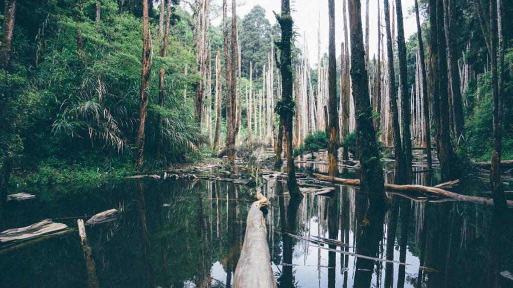 bomen-planten-amazone-thedailygreen