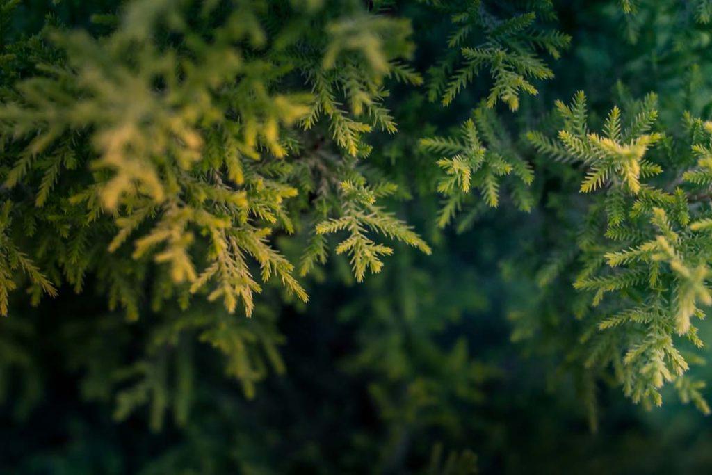 duurzaam-kerstfeest-thedailygreen