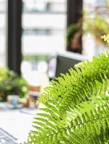 duurzaam-ondernemen-thedailygreen