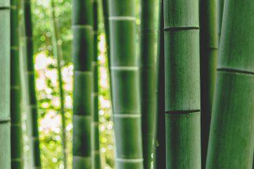 bamboe-als-alternatief-voor-katoen-thedailygreen